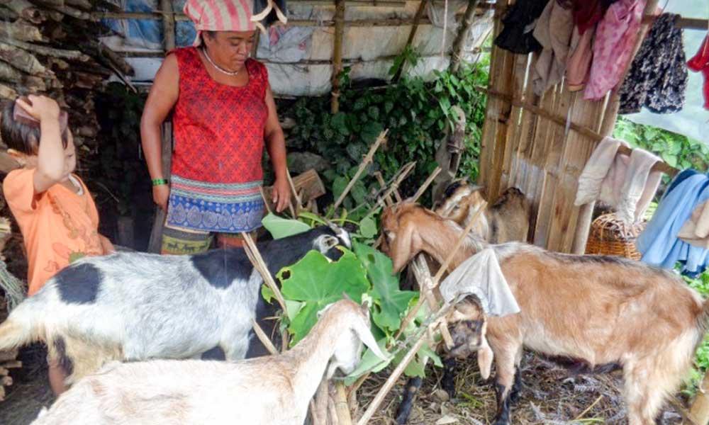 Goat rearing in Jumla transforming lives.